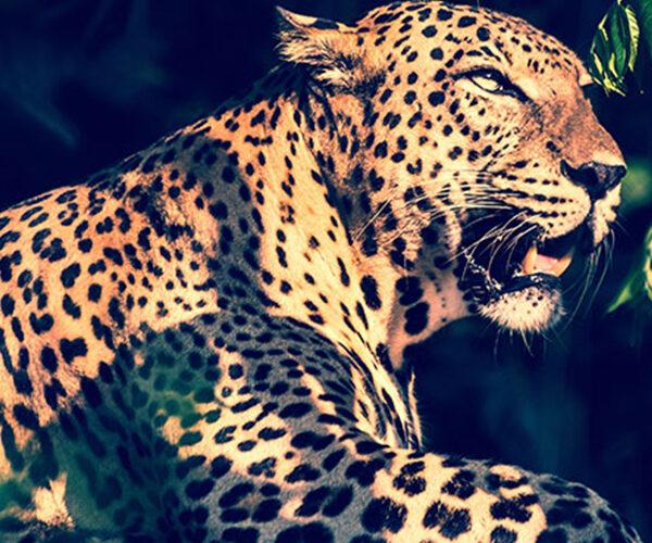 Yala Wild Life National Park